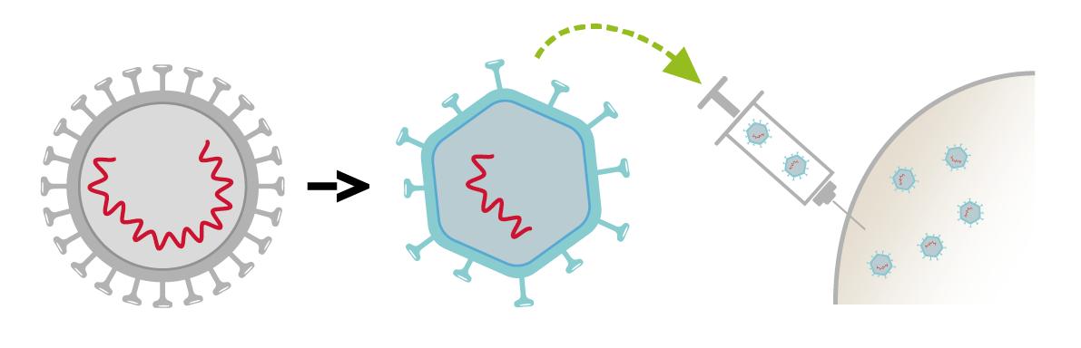 vaccino hpv virus attenuato papillomas cure