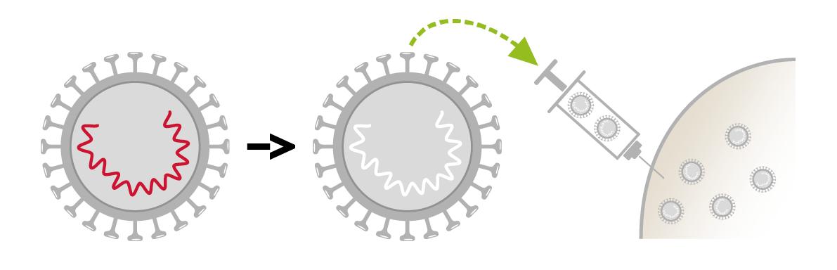 vaccino papilloma virus inattivato